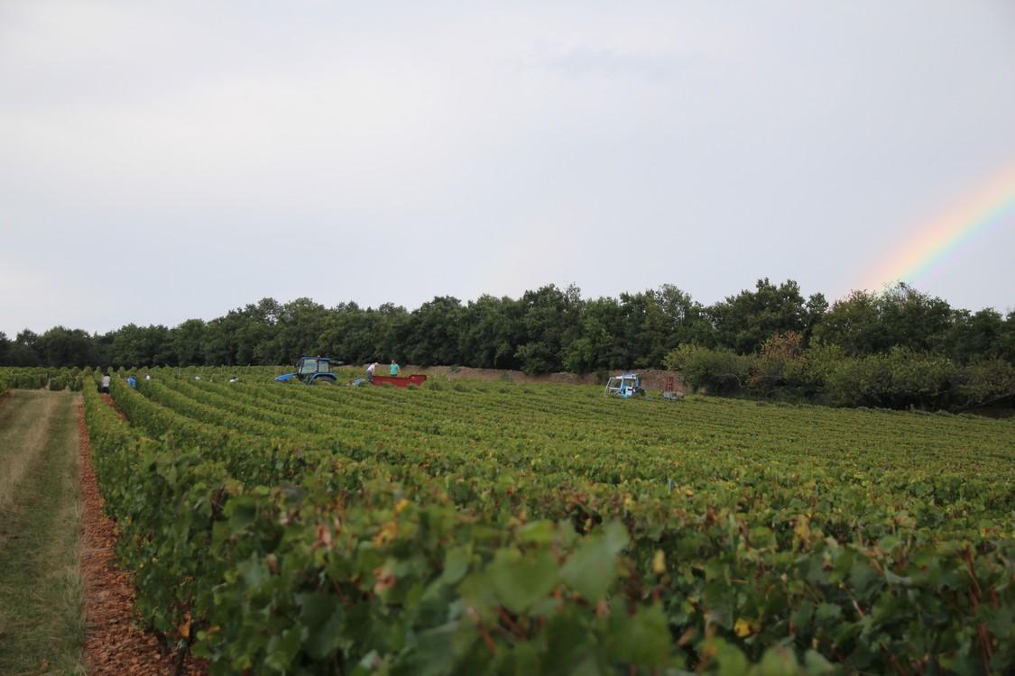 vignes - Domaine de Champ Fleury