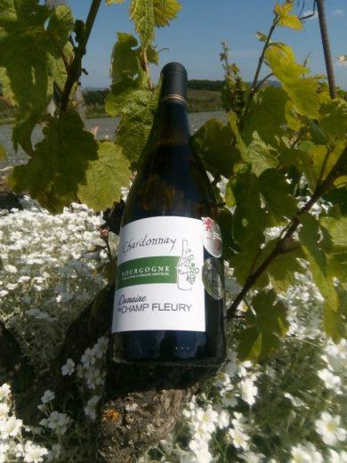 #Chardonnay day